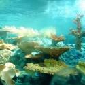 Fuori Pixar - Il cinema degli elementi: acqua - 06